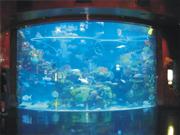 Silverton Aquarium
